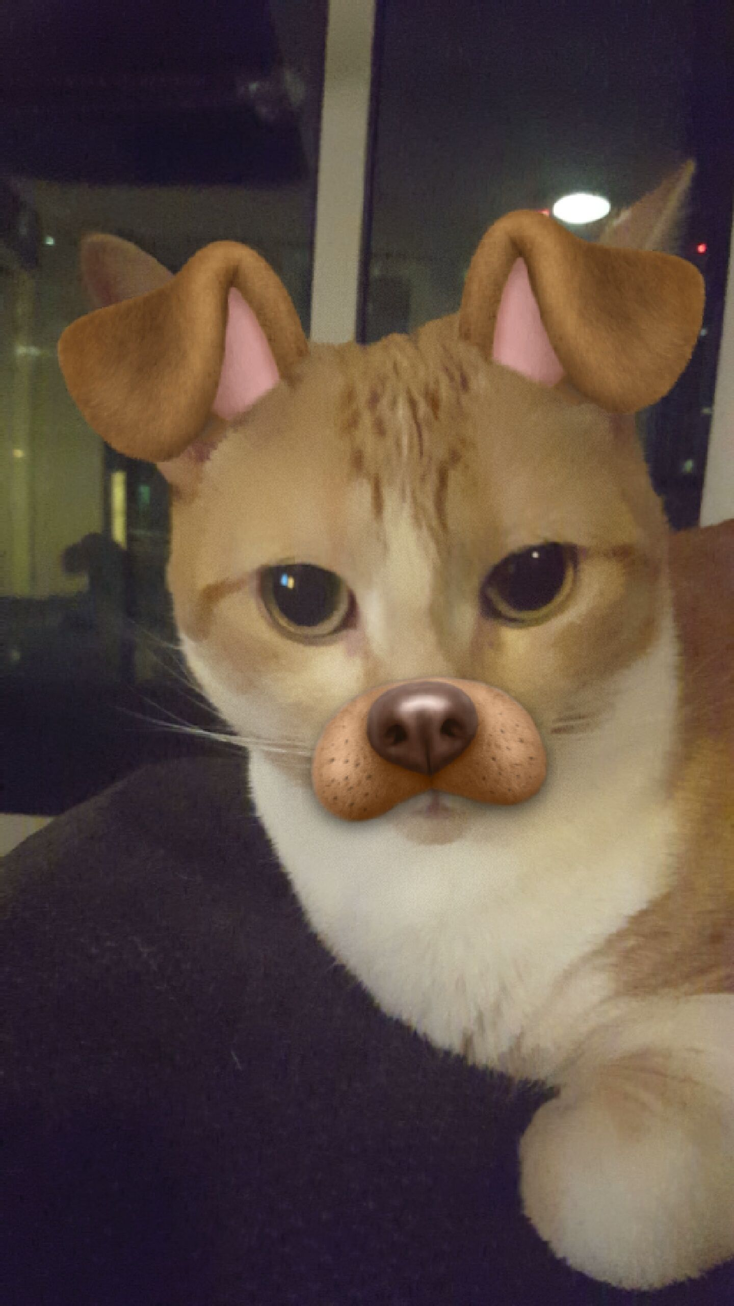So I Got The Snapchat Filters To Work On My Cat R Aww Funny Animal Photos Cute Cats Sleeping Kitten