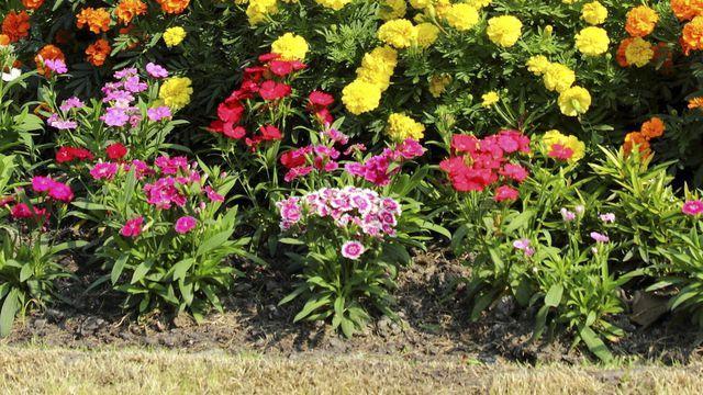 Plantation avril jardin : 10 fleurs et plantes à planter