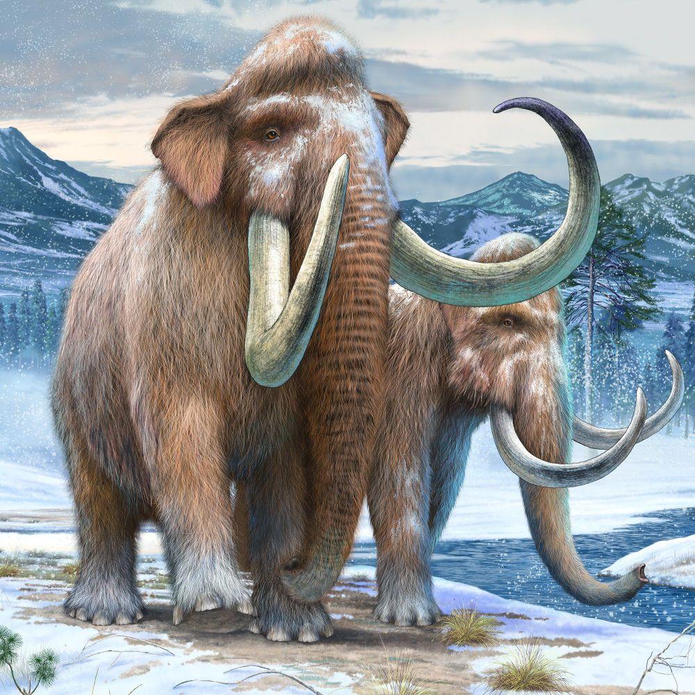 Приколом, открытки с мамонтом
