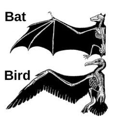 the wings of a bat and a bird are examples of