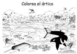 Resultado De Imagen De Dibujos De Ecosistemas Para Colorear