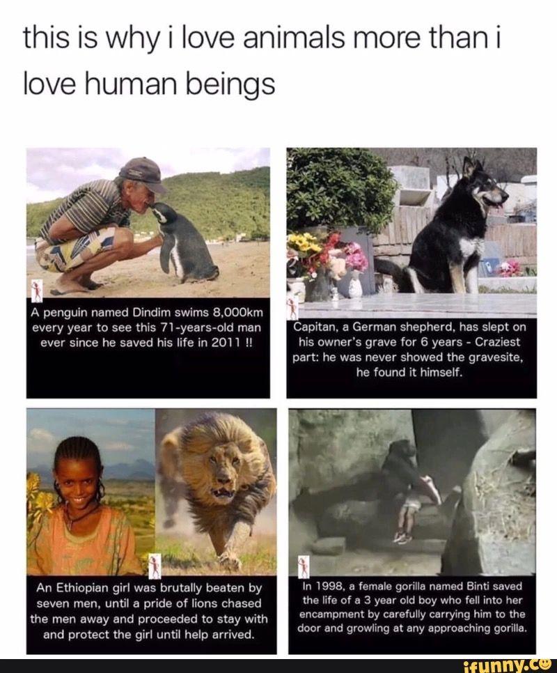 Animals Penguin names, Animals, Cute pictures