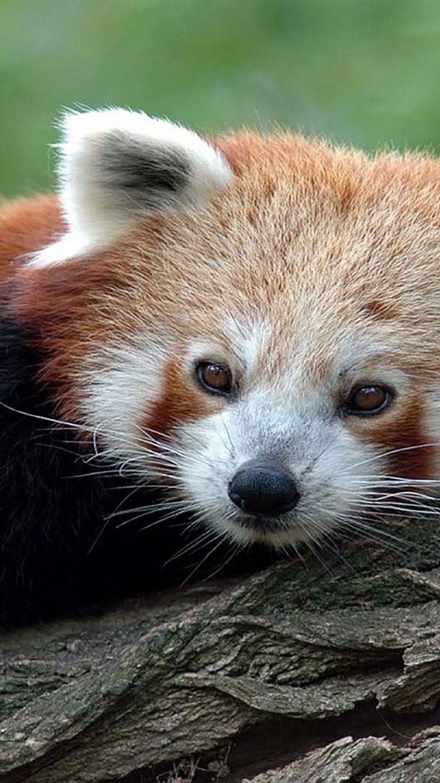 Photo of 75 HD Tiere iPhone Hintergründe, #animalbackgroundiphone #Animals #backgrounds #IPHONE