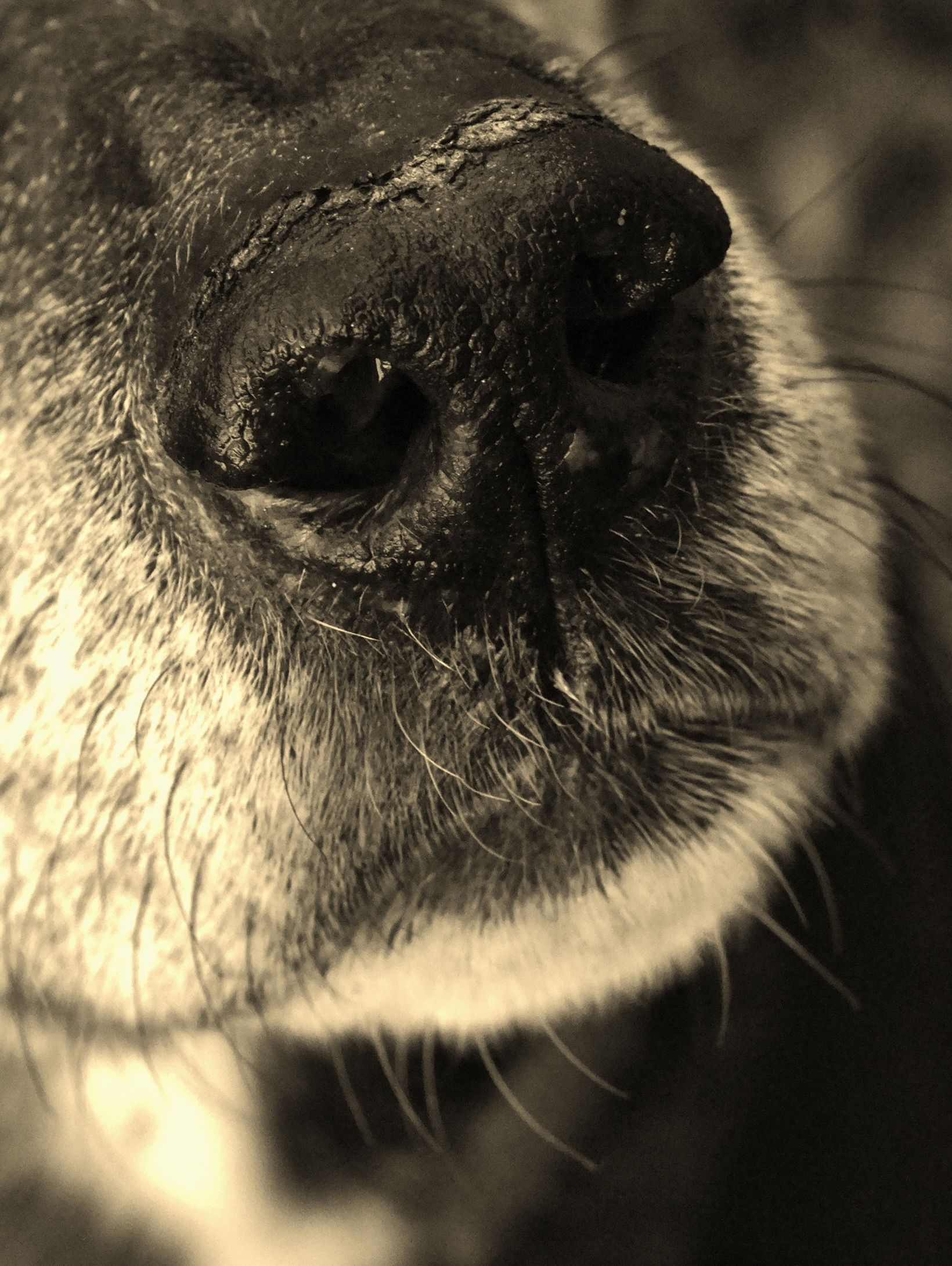 Pin By Molly Boyd On Tattoo Ideas: Puppies, Nose, Photography