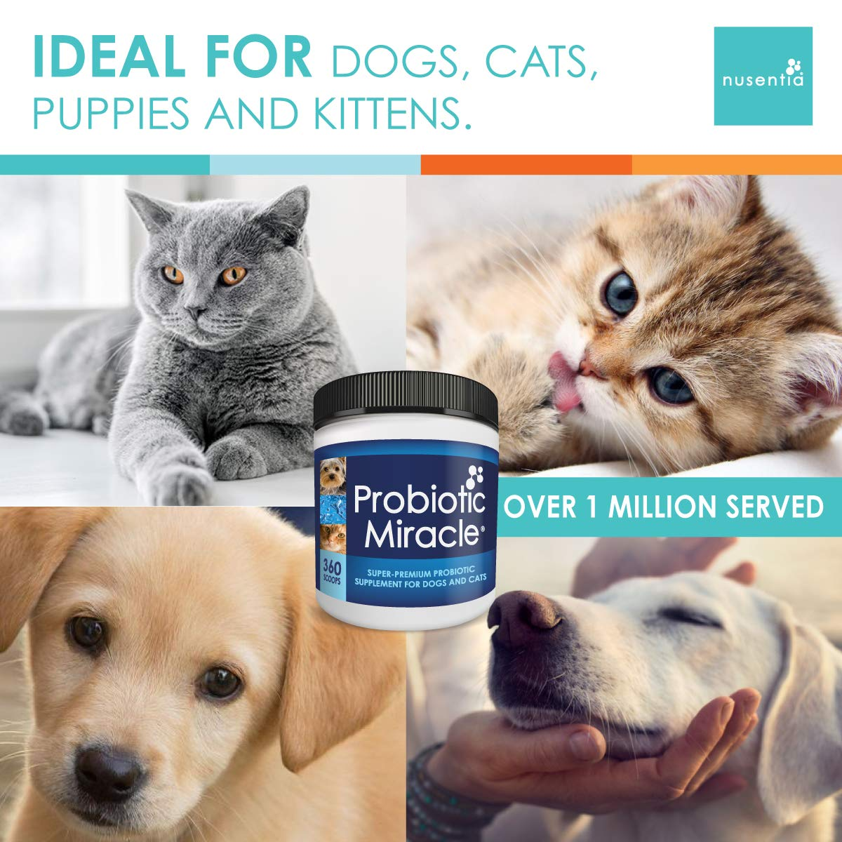 Probiotics For Cats Dogs 120 Scoops Probiotic Miracle