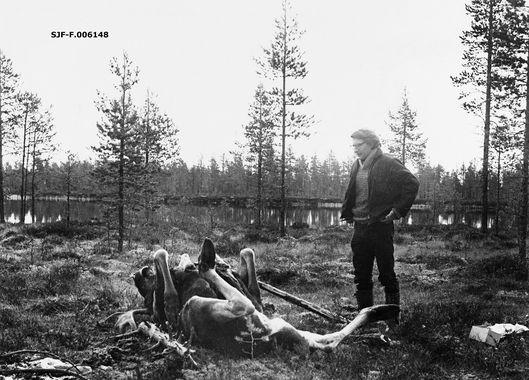 DigitaltMuseum - «Preparant Per Lynne klar til å flå. Søndre Lemtjern. 3.10.1971»