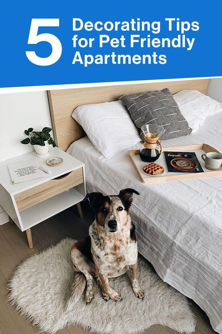 pet friendly hotels near tucson