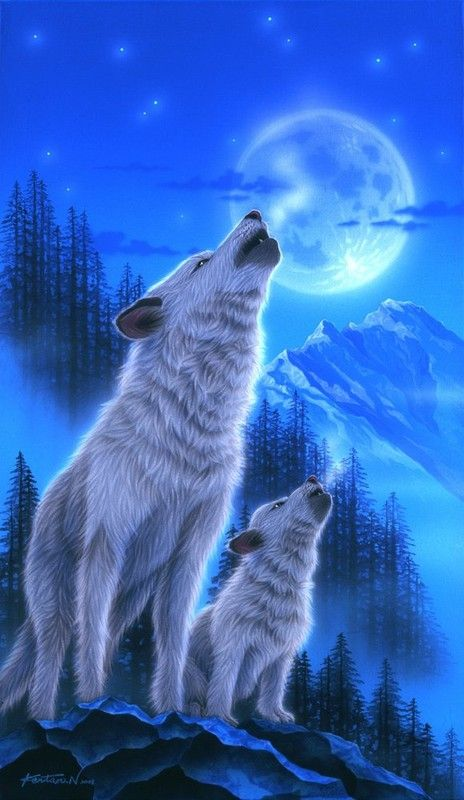 Animaux Kentaro Nishino Images Loup Fond D écran Loup Loup Fantasy