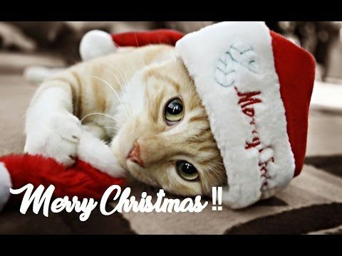 Merry Christmas To Everyone Hereu0027s A Gift For You. Cute CAT OF INSTAGRAM  Gives CUTE