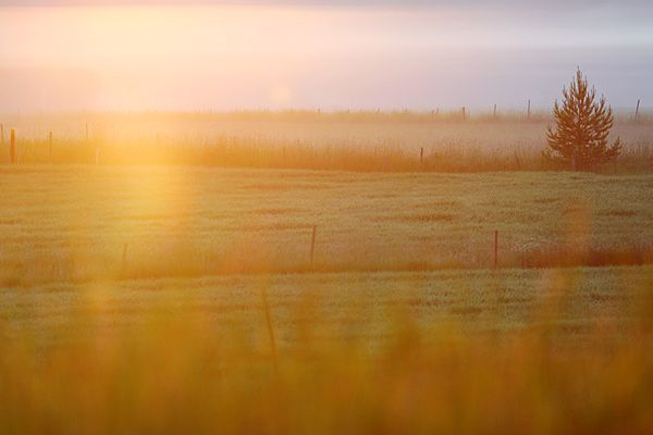 Morning at the Redland countryside