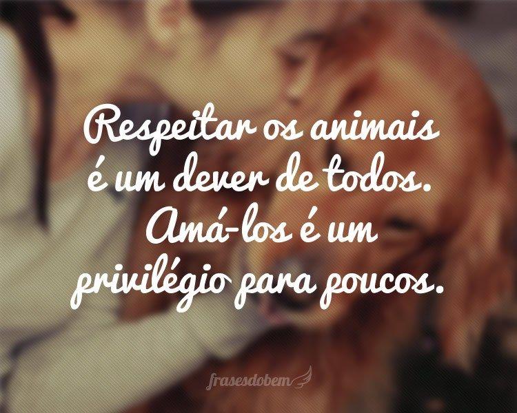 Frases Para Status Animais Respeitar Perros Pinterest