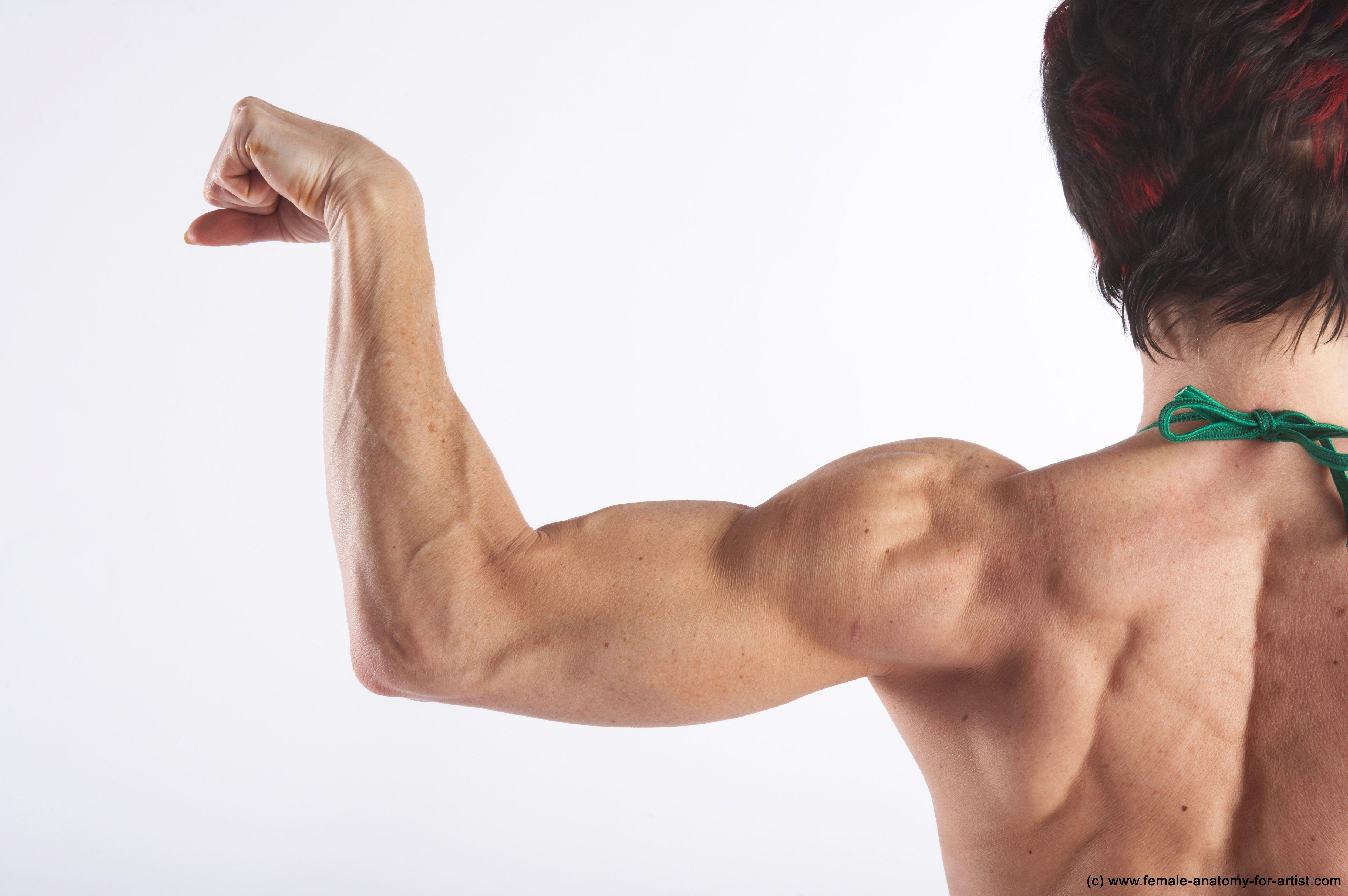 Muscular Arm Model Gizela Credit Female Anatomy For Artist