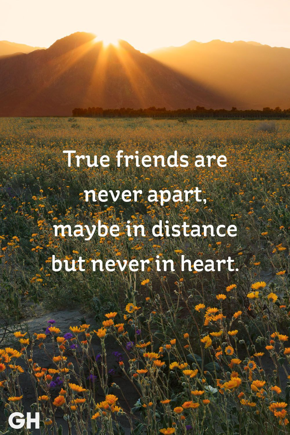 4 Short Friendship Quotes to Share With Your Best Friend - Cute