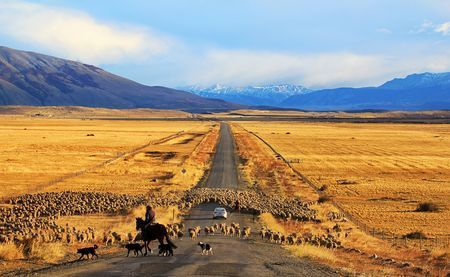 traffic jam! Photo by Itamar Campos -- National Geographic Your Shot