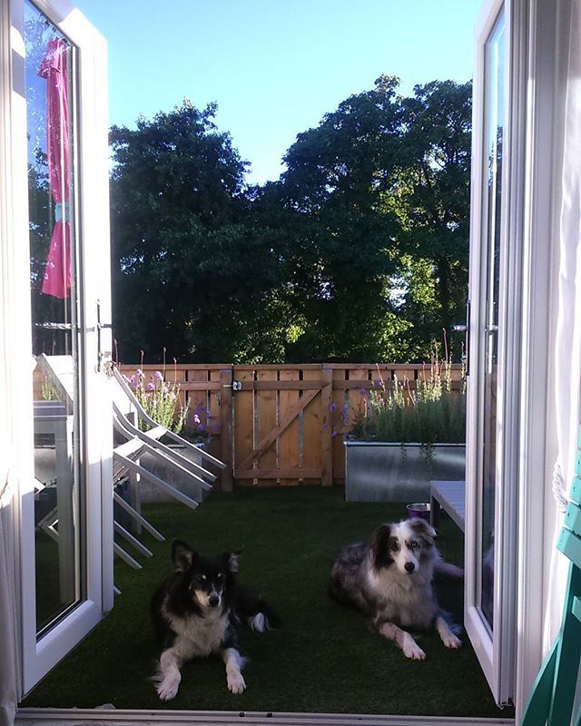 Dogs of Dunster #dunsterbeachhut
