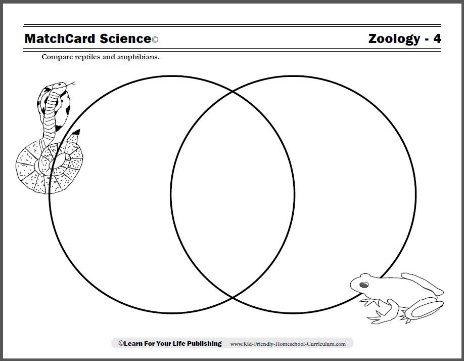 Quick Quiz Name the difference between a reptile and amphibian – 3rd Grade Science Worksheets