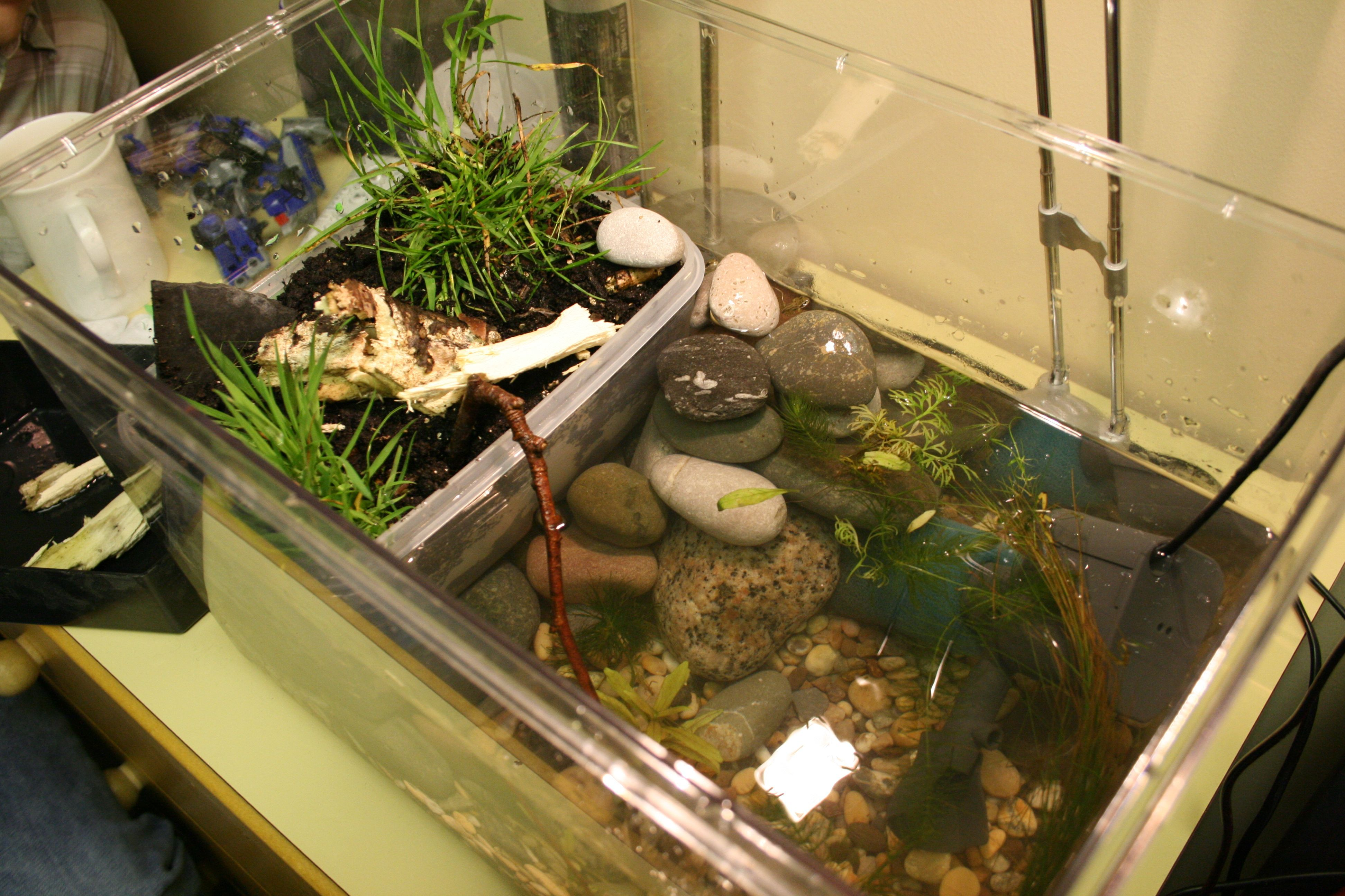 I chose a frog tank so children can watch the different stages and