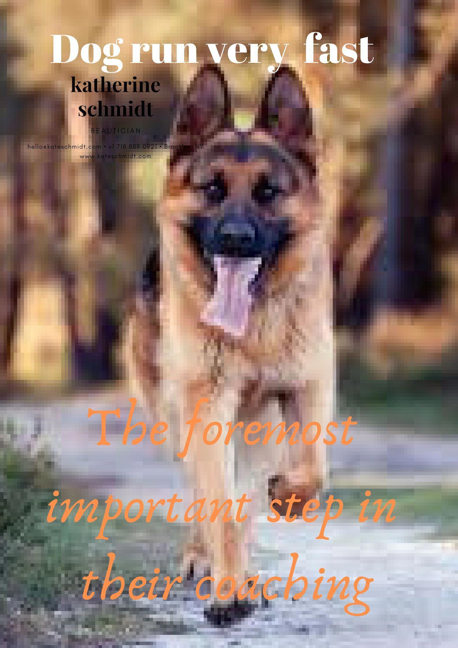 Easy Dog Training Dogtrainingadvice 4110039250