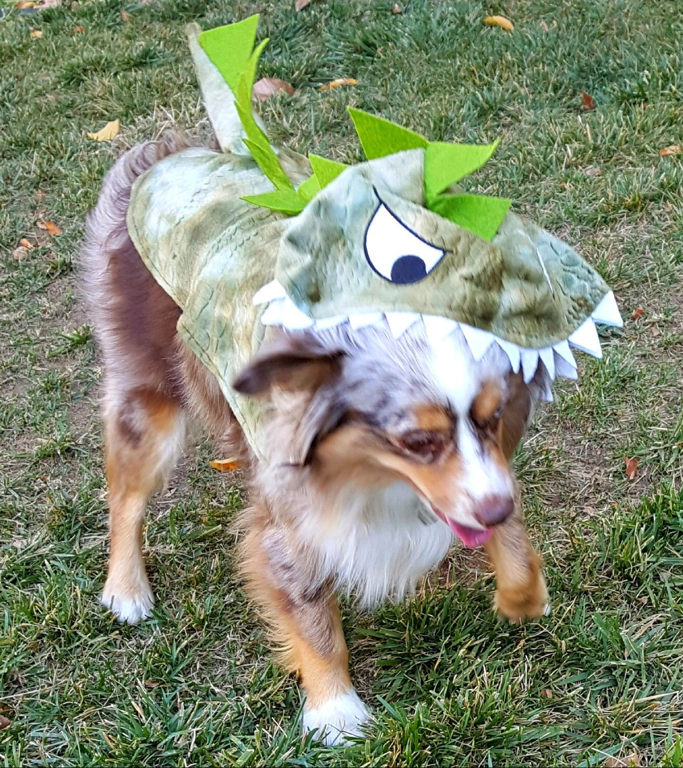 Maisy S Halloween Dog Costume Mini Australian Shepherd Red