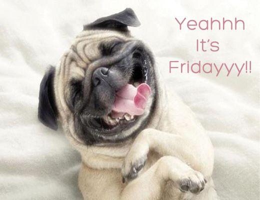 4 13 15 Happy Friday Witzige Hundebilder Lustige Bilder Von