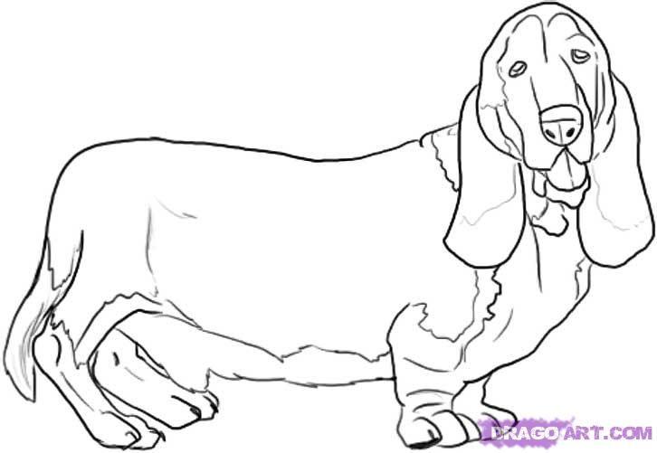 How To Draw A Basset Hound Bassett Hound Basset Hound Dog Drawing