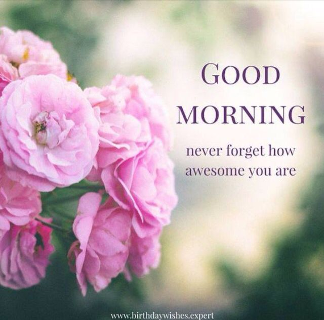 Beautiful Flowers Images With Friendship Quotes: Good Morning Never Forget How Awesome You Are Pictures