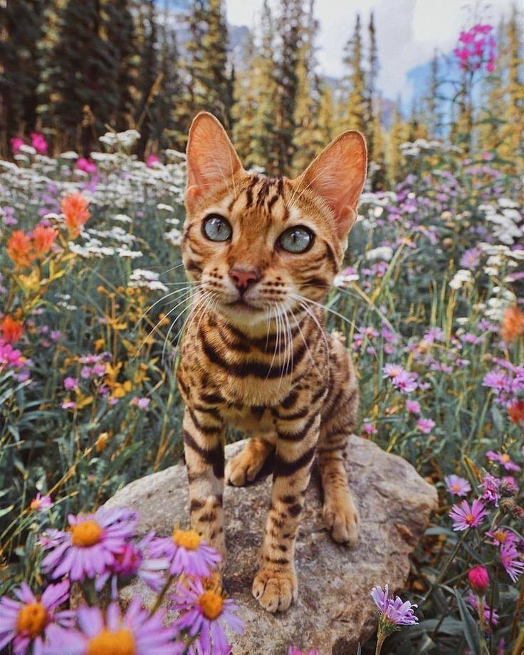 cats pets cute Hypoallergenic cats, Cat breeds, Cat