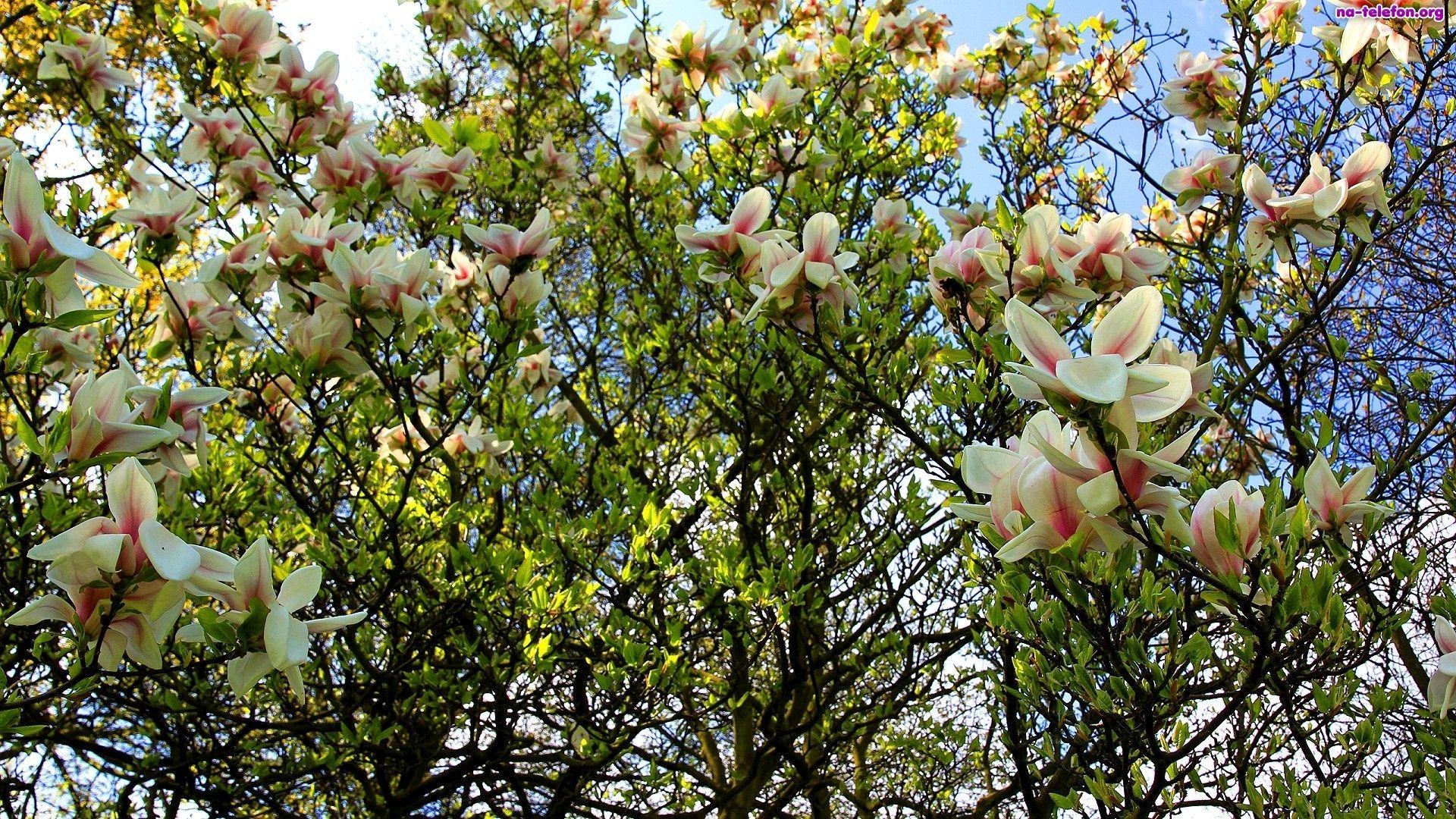 Tulipany Free Tapeta Wiosna Tapety Pulpit Hd 1949147 Beautiful Wallpapers Plants Wallpaper