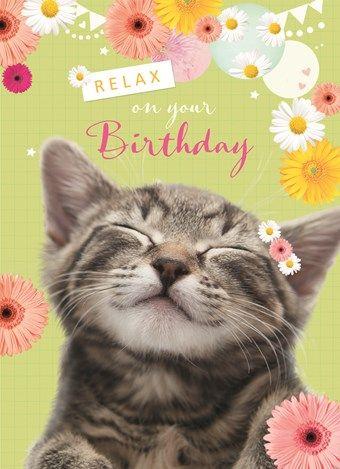 Pin By Amira Yunus On Dieren Happy Birthday Cat Happy Birthday Wishes Cards Happy Birthday Greetings
