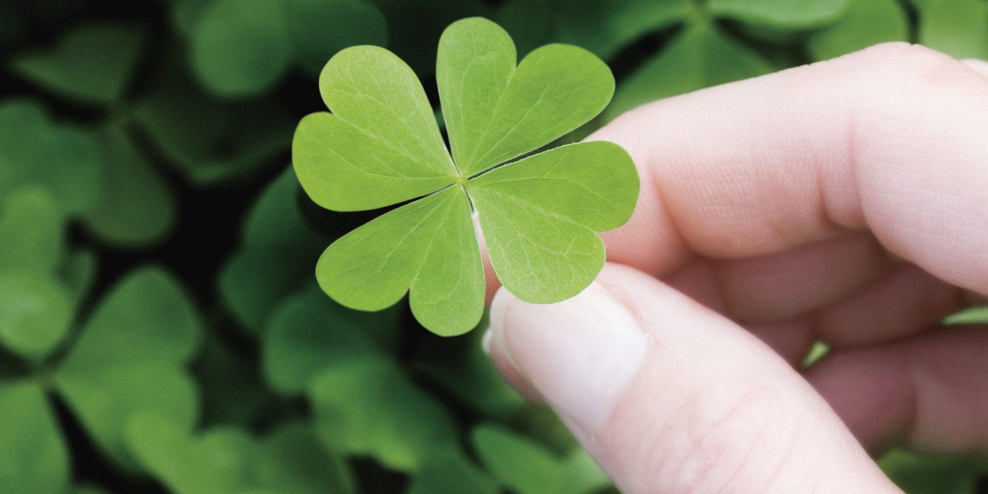 Are You Gambling When Starting A Business How Much Luck Do You Need Gamblers United Hoja De Trébol Treboles 4 Hojas Trebol