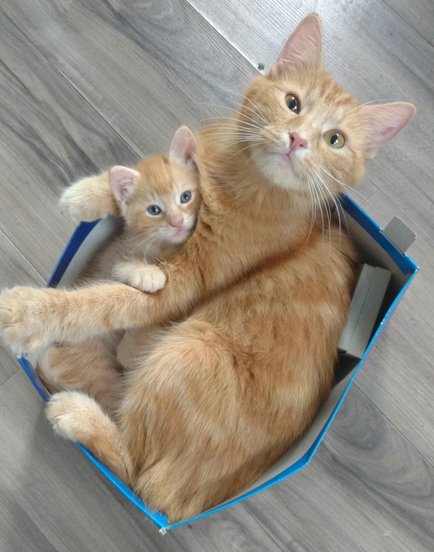 Justviral Net Find Viral Images Online Cute Cats Cats Kittens