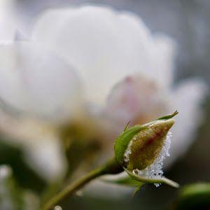 Barfota i gummornas trädgård! - MinEden Trädgårdsblogg Puutarhablogi Gardenblog