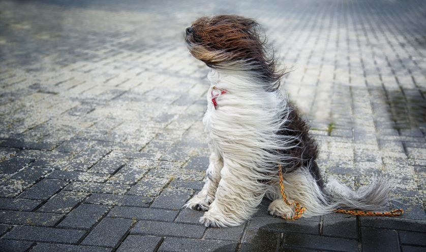 17 Images Of Dogs Enjoying A Windy Day Dogs Dog Wound Water Dog
