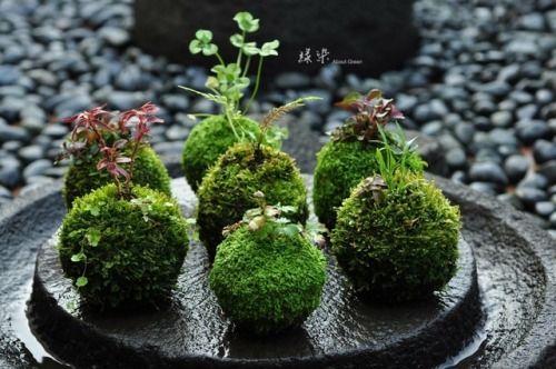 Simon S Aquascape Blog Aquascape Tiny Landscape Hanging Garden