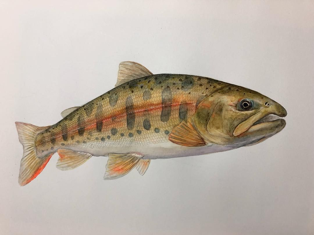 New The 10 Best Art Today With Pictures 魚描き筋トレ 尺ヤマメ Art Artwork Illustration Watercolor Trout Japan 水彩 トラウト ヤマメ 渓流 釣り アート イラストレーション イラ ヤマメ 魚 水彩