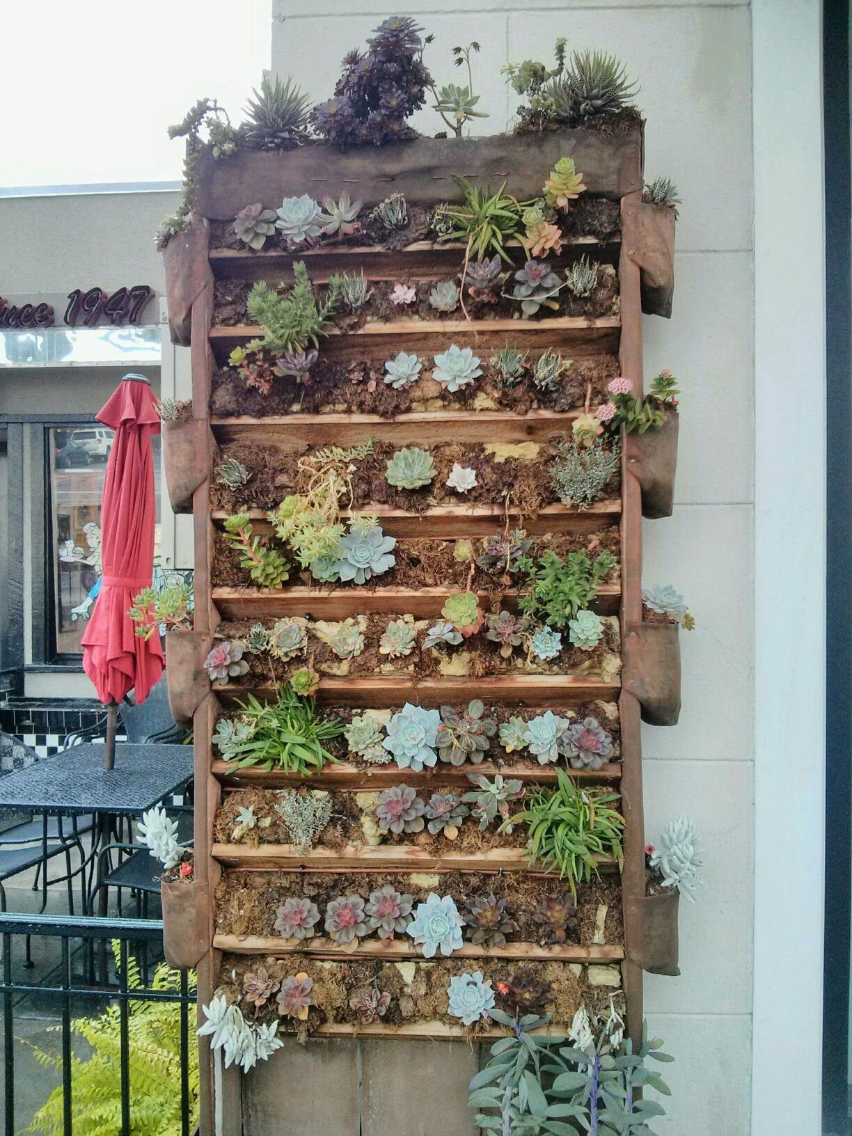 A small vertical garden on the wall of a restaurant downtown ...