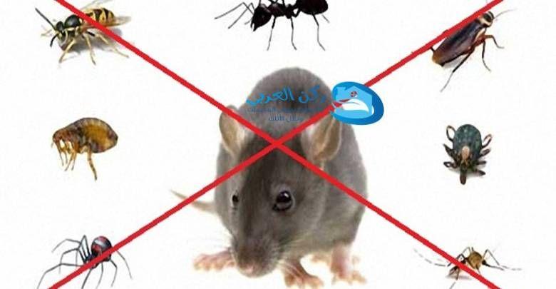 شركة مكافحة الفئران فى عنيزة الفئران من الكائنات الموجودة في البيئة و تتواجد عادة باعداد بسيطة اذا توافر لها الطعام والمأوى في Clean House Wind Sock Animals