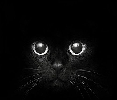 THE EYES OF A CATMESMERIZING