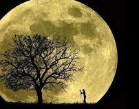 Season Fee fall in love with Tree by Viola Wan, via Behance