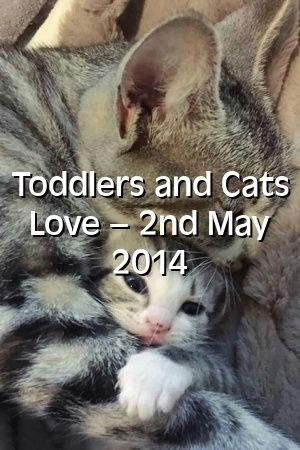 Alexandra Hill Tells About Toddlers and Cats Love – 2nd May 2014   #catbreeders  #catlover  #world  #adoptdontshop  #cutecats  #Choose  #catcondo  #Tabby