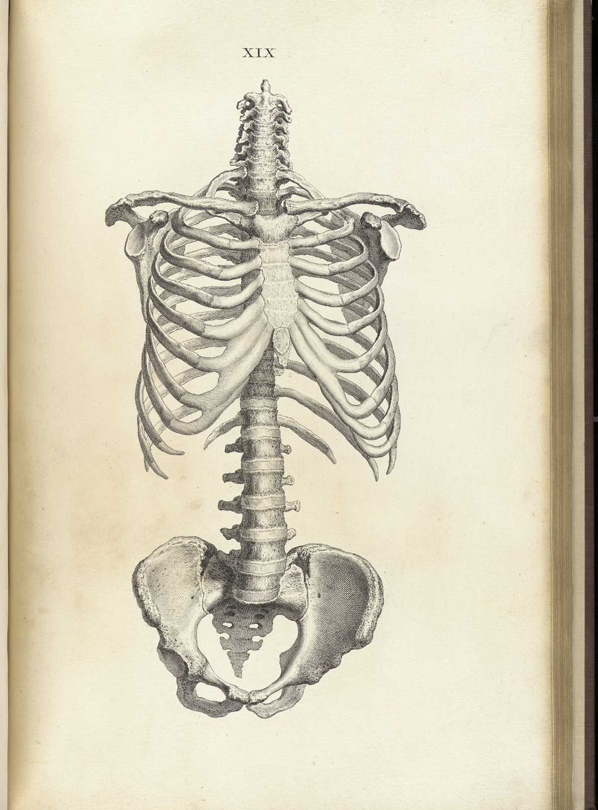 William Cheselden Osteographia Or The Anatomy Of The