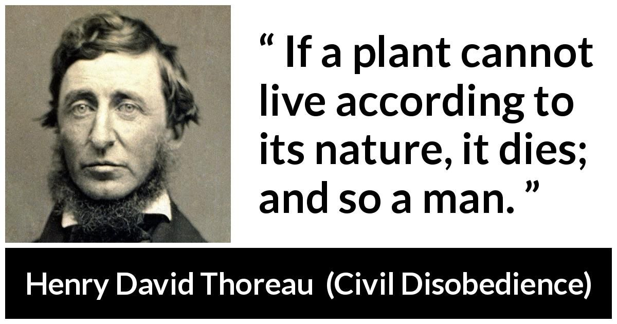 Henry David Thoreau Quote About Freedom From Civil Disobedience Henry David Thoreau Quotes Freedom Quotes Thoreau Quotes