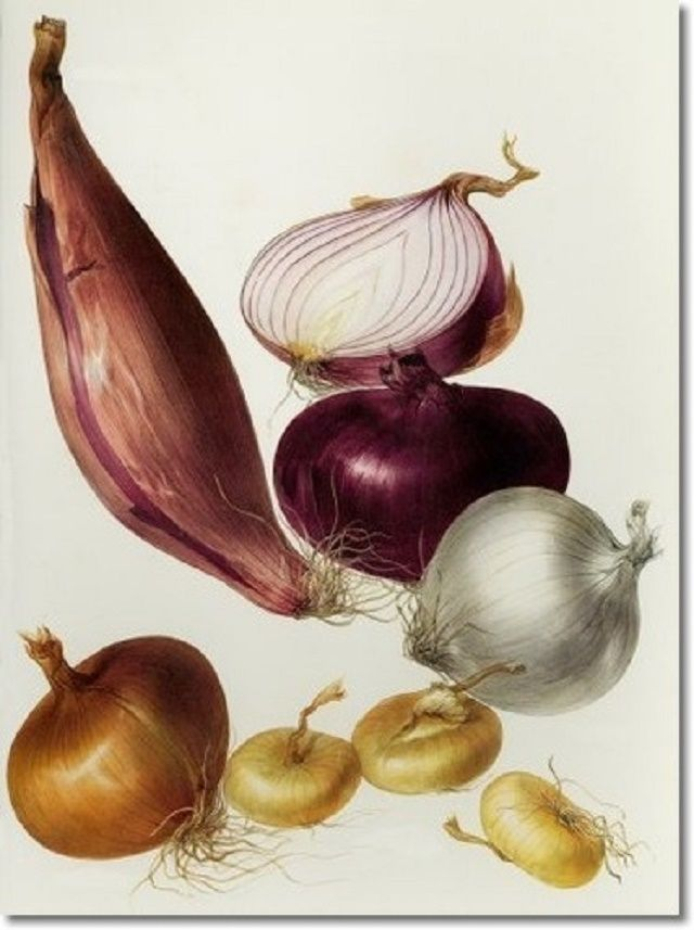 5 maneras de cortar cebolla sin derramar ni una lagrima. http://www.saborcontinental.com/2014/01/5-maneras-de-cortar-cebolla-sin-derramar-ni-una-lagrima/