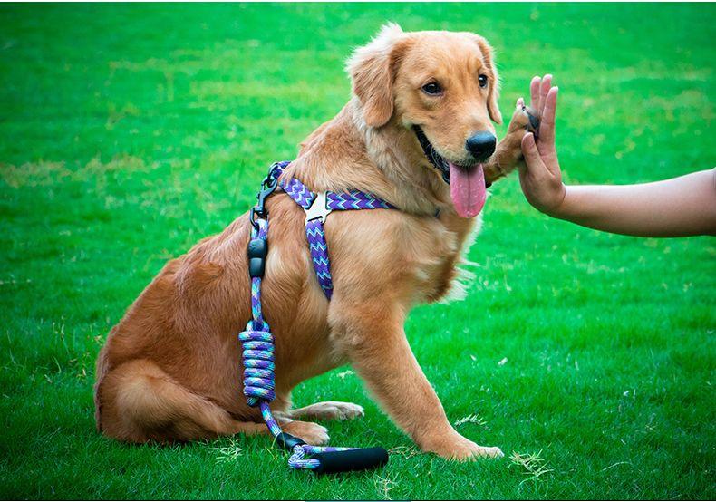 Pin On Manufacturer Wholesale Nylon Dog Leash And Collar Dog Leash