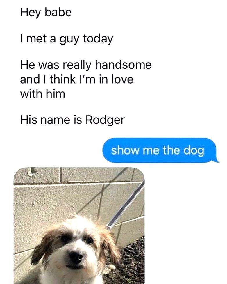Bahahahaha Dog Memes So Funny Dog Meme Fireworks Dog Memes Funny College Memes Dog Meme Jokes