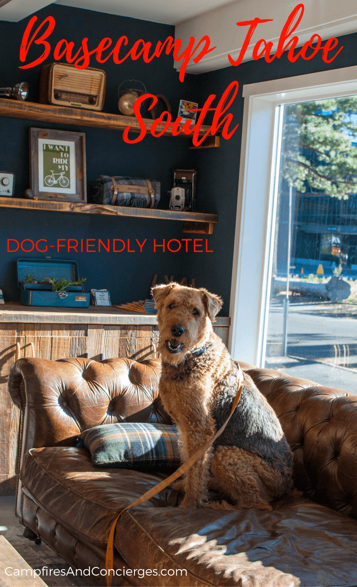 Where To Stay In With Dogs In Lake Tahoe Pet Friendly Lake Tahoe Lodging Basecamp Hotel Tahoe South Lak Dog Friendly Hotels Dog Friends Dog Friendly Vacation