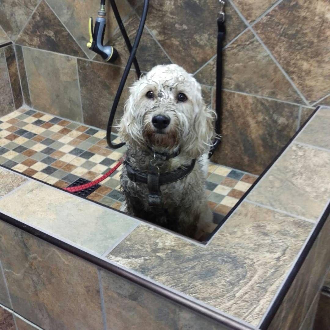 This Cutecustomeralert Needed A Bath After A Fun Day At The Muddy Dog Park Pet Valu Muddy Dog Pets Dog Park