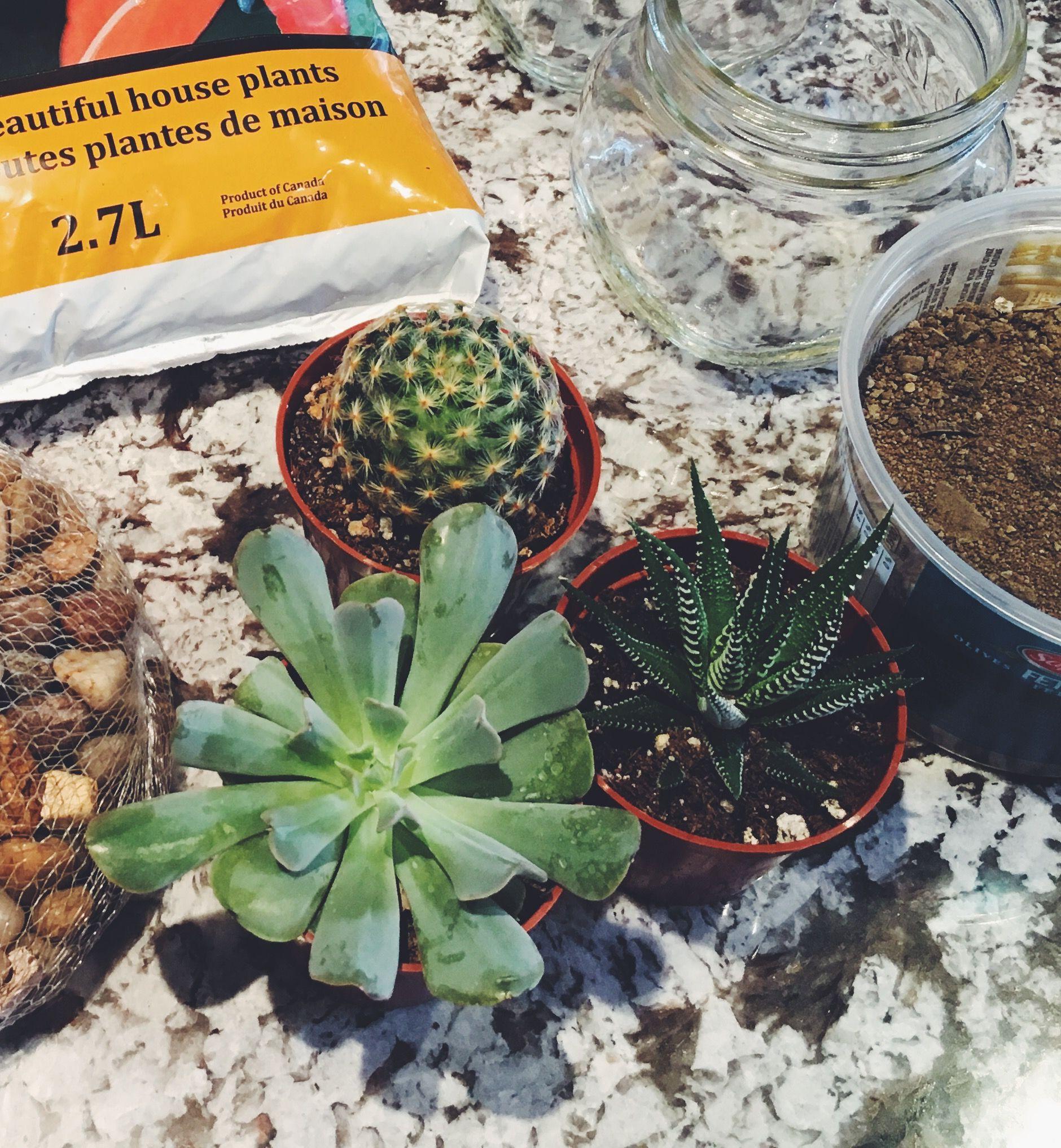 Cozy Me Diy Terrarium De Succulentes Cactus Succulentes