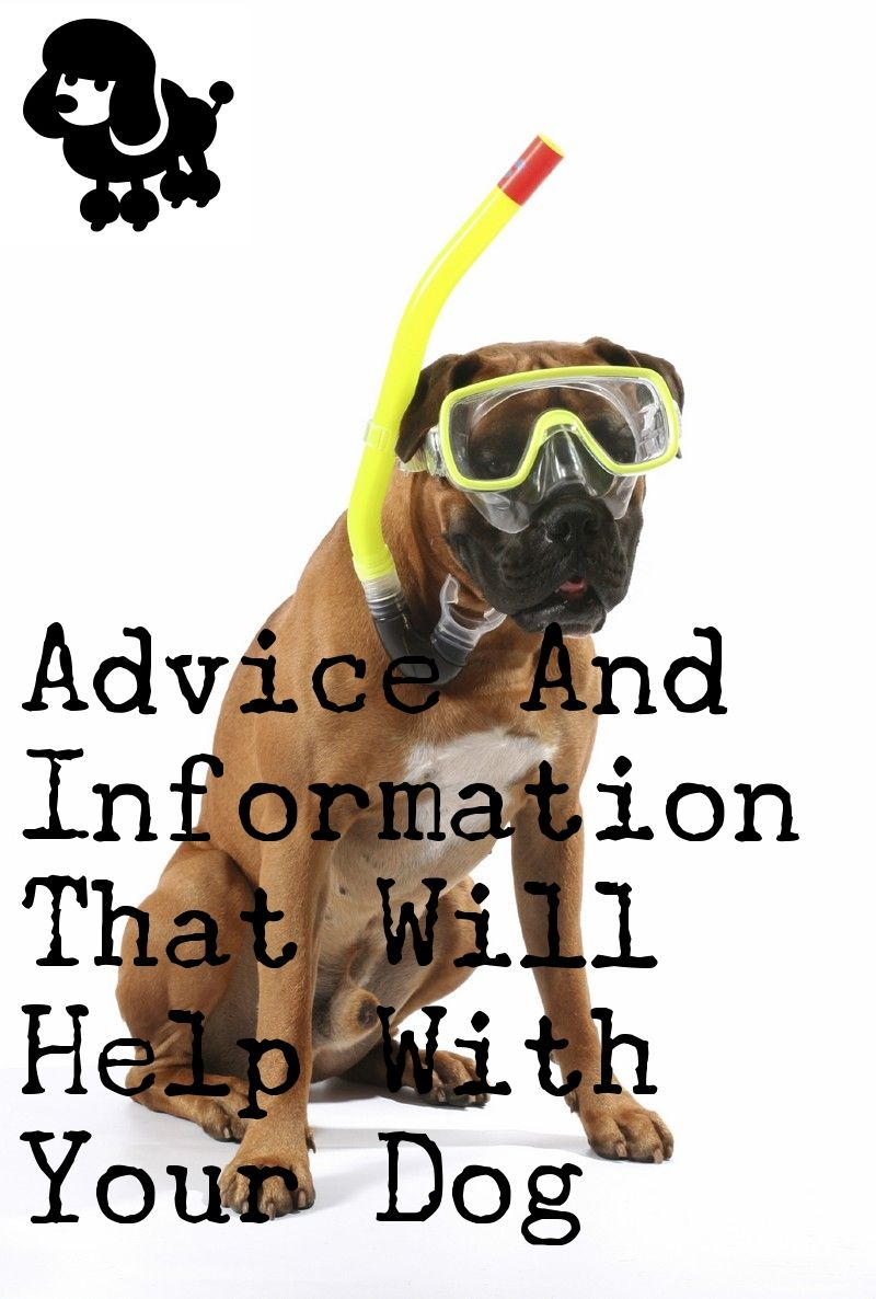 Prepare Yourself For Taking Care Of A Dog Your Dog Dog Care