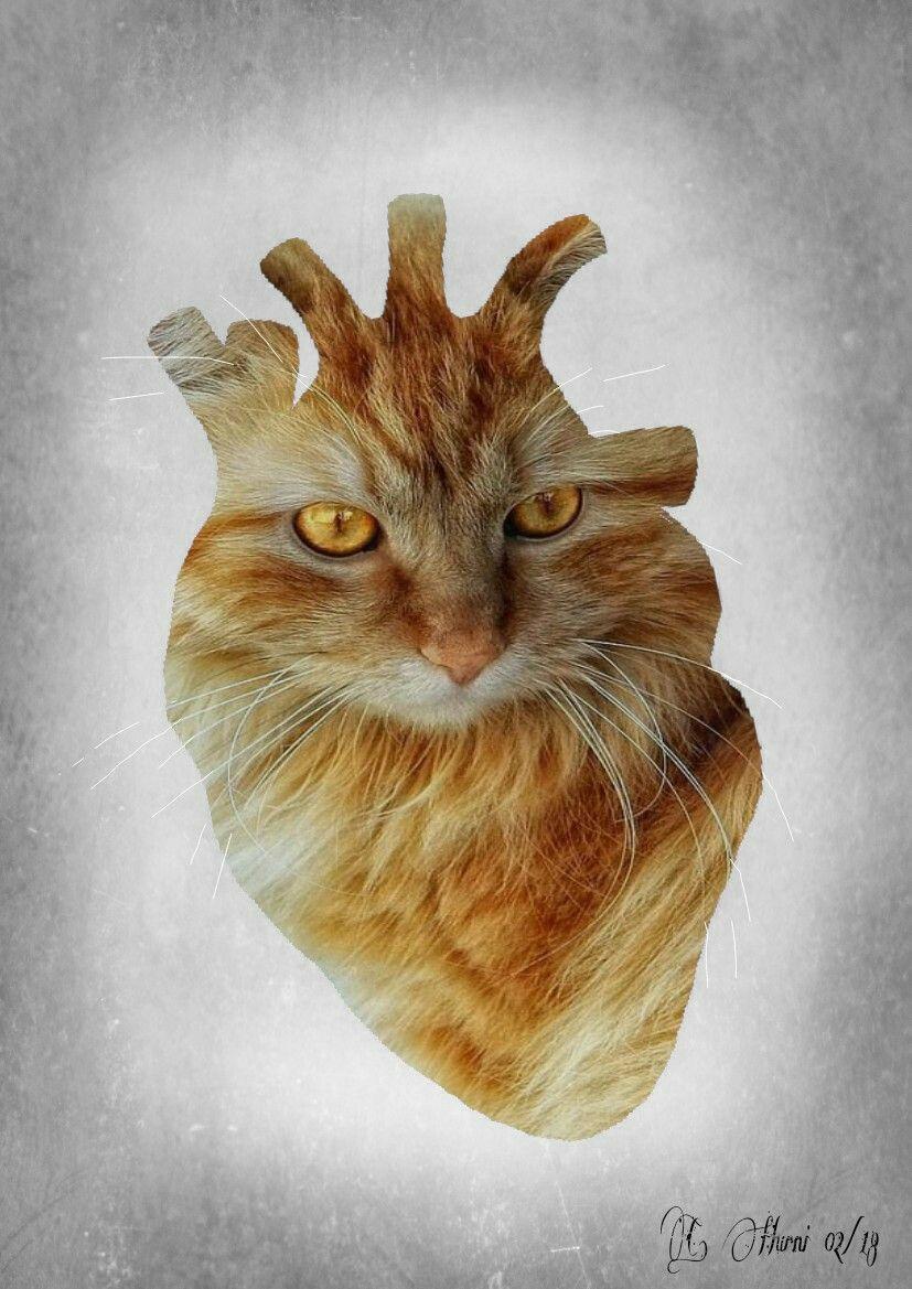 Cat heart | Corazón ♡ | Pinterest | Anatomy, Heart art and Artwork